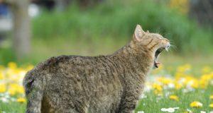 gatto_pigro.jpg