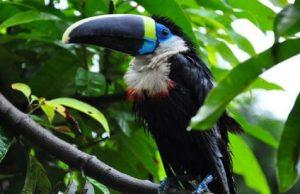 la-foresta-amazzonica.jpg