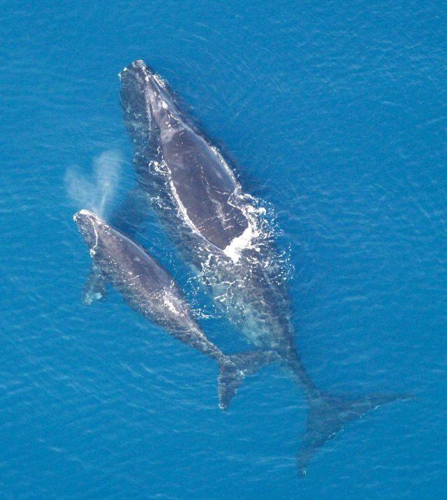 balene.jpg