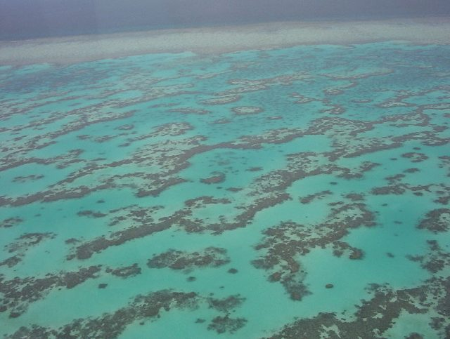 corallina.jpg