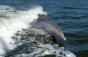 delfino.jpg