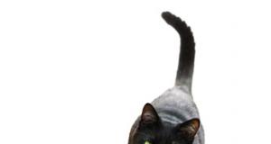 gatto nero.png