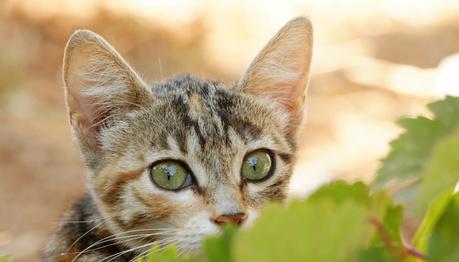 gatto spaventato.jpg