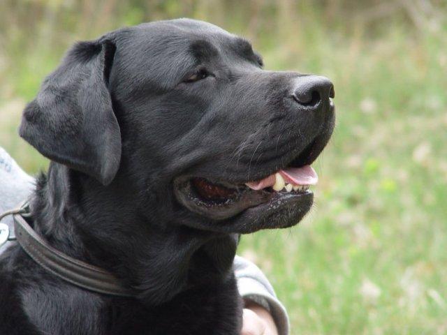 Boss Il Cane Poliziotto Di Rio Minacciato Di Morte Dai Narcos