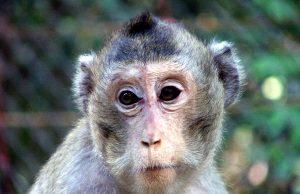 macaco2buav.jpg