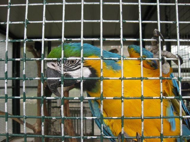 pappagallo.jpg