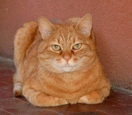 Biologo Inglese I Gatti Pensano Che Luomo Sia Come Loro