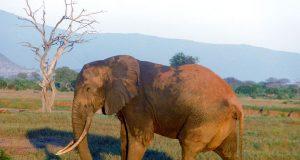 elefantesavana.jpg