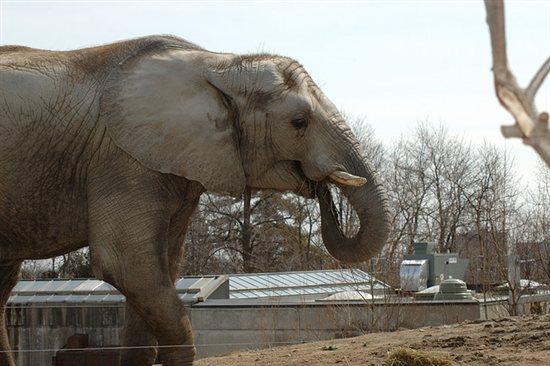 elefantepeta.jpg