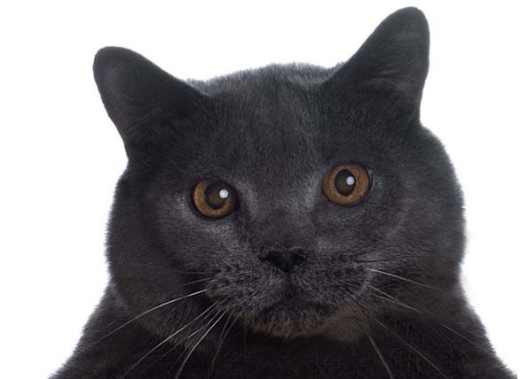 gattocorriere.jpg