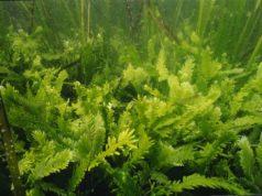 alghe.jpg