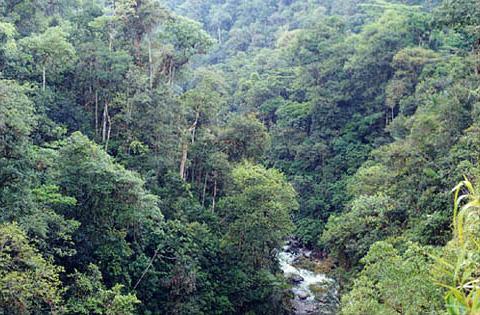 forestaecuador.jpg