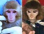 scimmiaspazio.jpg