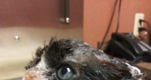 gattinobruciato.jpg
