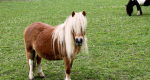 pony.png