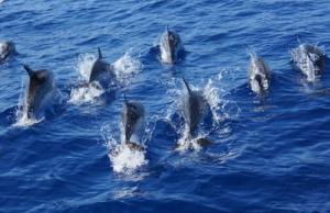 delfinifuga.png