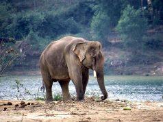 elefanteindiano.jpg
