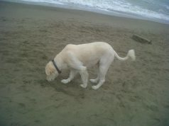 canespiaggia.jpg