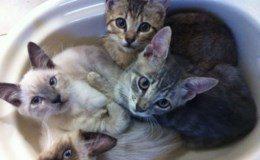 gattiniscatolagela.jpg