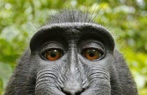 macaco_0.jpg