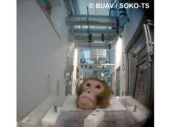 macacoesperimento.jpg