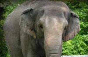 elefantesabrinazoodinapoli.jpg