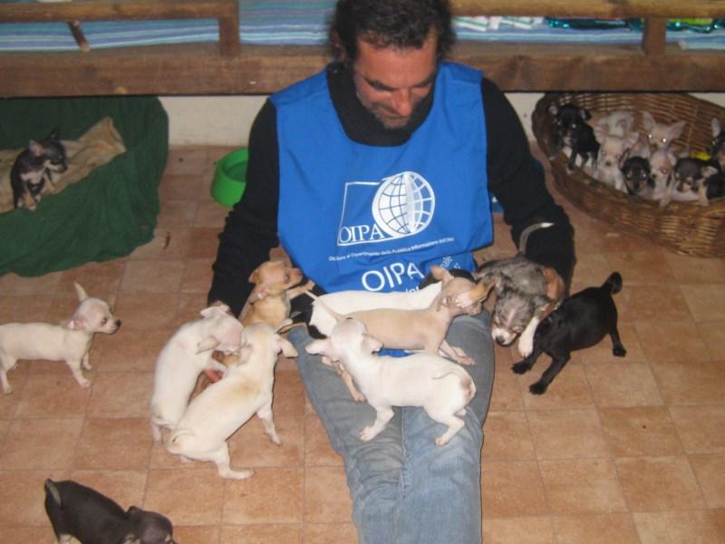 Udine Dicembre Nero 400 Cani E Gatti Dallest Europa Sequestrati