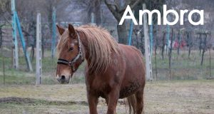 ambralndc.jpg