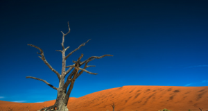 alberosecconamibia.png