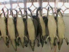 coccodrilli.jpg