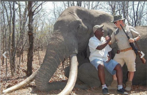 safari-elefante-722124.png