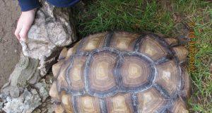 tartarugaopia.jpg