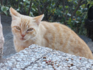 gatosrd.png