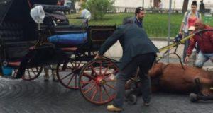 1792526_botticelle_cavallo_caduto_piazza_venezia_2.jpg