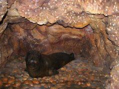 foca monaca.jpg