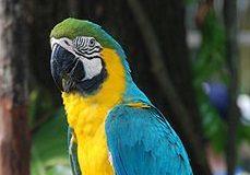 pappagalloara.jpg