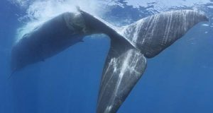 balena.jpg