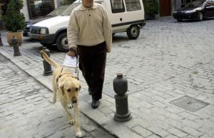 cane-guida.png