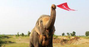 elefantemohan.jpg