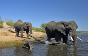elefanti.png