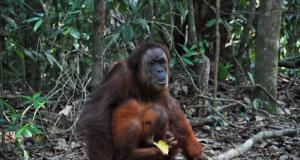 orangofemmina.png