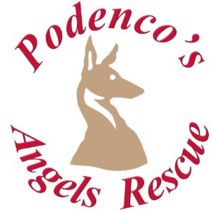 Podencos Angels