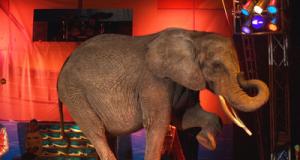 elefantecirco.png
