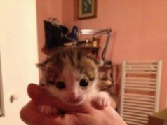gattinioipataranto.jpg
