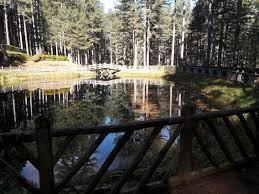 Parco Della Sila Allavanguardia Per Tutela Biodiversità Nelcuoreorg