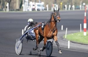 fdca1ff553b6 cavallo
