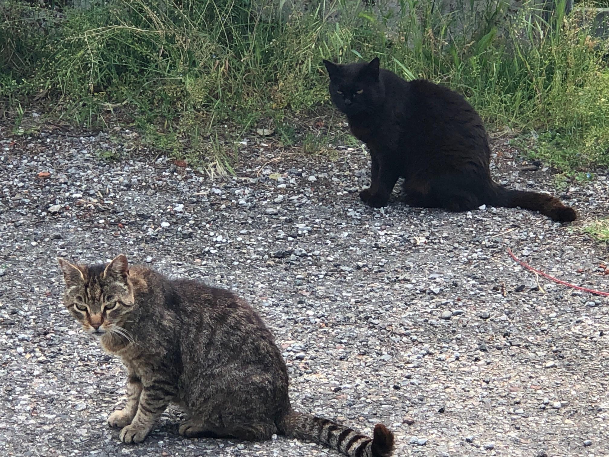 Teramo Movimento Animalista Denuncia Degrado Colonia Felina Nelcuore Org